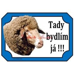 Tabulka beran, ovce merino