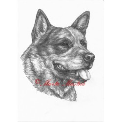 Obraz australský honácký pes, tužka - tisk