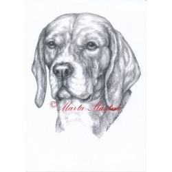 Obraz bígl, beagle, tužka - tisk