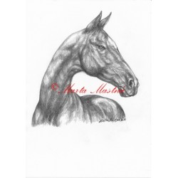 Obraz achaltekinec, achal-teke, kůň, koně, tužka - tisk