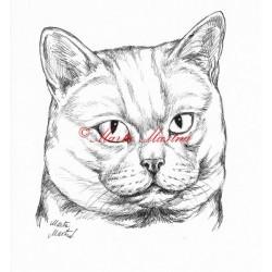 Samolepka kočka britská