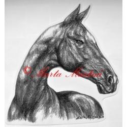 Samolepka achal-teke, achaltekinec, kůň, koně
