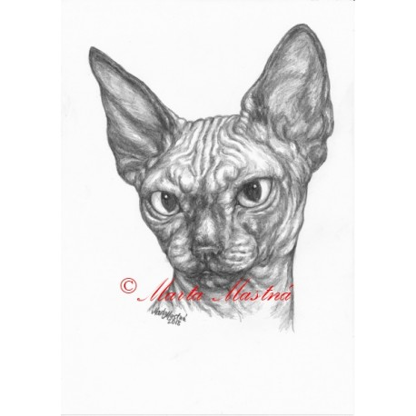 Obraz kočka sphinx, sfinx, tužka - tisk