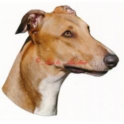 Samolepka greyhound, anglický chrt