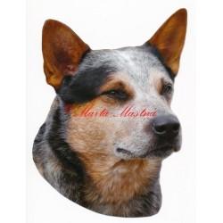 Samolepka australský honácký pes, honák