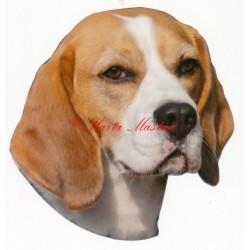 Samolepka bígl, beagle