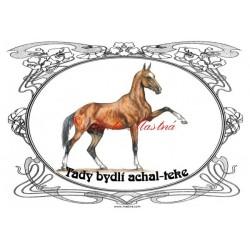 Tabulka achaltekinec, achal teke, kůň, koně