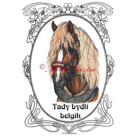 Tabulka českomoravský belgik, chladnokrevník, kůň, koně