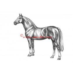 Samolepka teplokrevník, Furioso II., kůň, koně