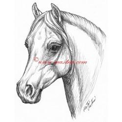 Samolepka welshpony, velšpony, kůň, koně
