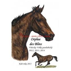 Obraz anglický plnokrevník Orphee des Blins, koně, perokresba - tisk