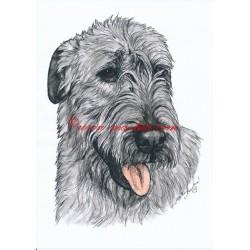 Obraz chodský pes, tužka - tisk