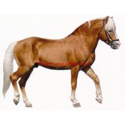 Samolepka hafling, kůň, koně