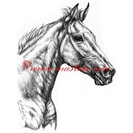 Samolepka teplokrevník,Orphee des Blins , kůň, koně