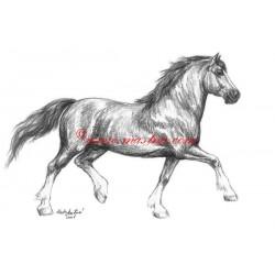 Obraz velš, welsh cob, koně, tužka - tisk
