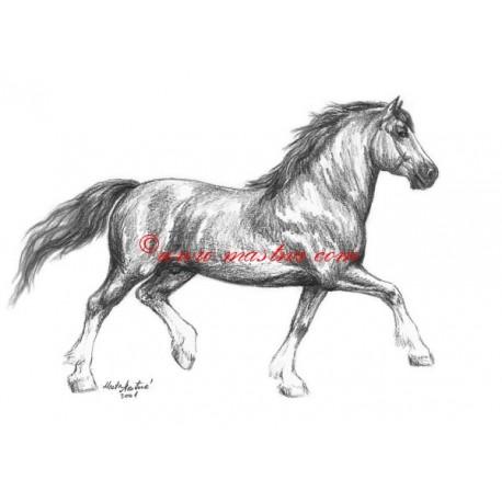 Obraz teplokrevník, drezura, kůň, koně, tužka - tisk
