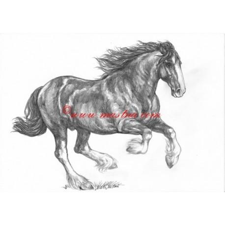 Obraz shire horse, kůň, koně, tužka - tisk