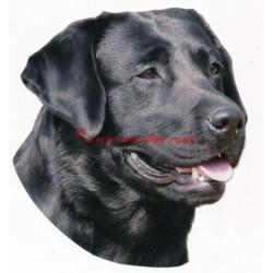 Samolepka labrador retriever, retrívr