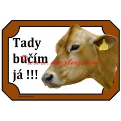 Tabulka kráva jersey, skot