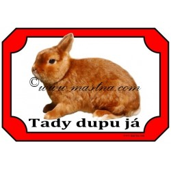 Tabulka králík zakrslý saténový
