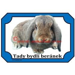 Tabulka králík zakrslý beran divoce zbarvený