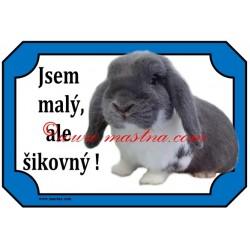 Tabulka králík zakrslý beran modrý