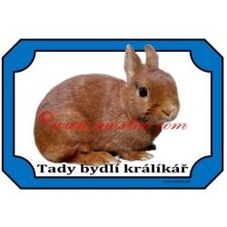 Tabulka králík zakrslý červený