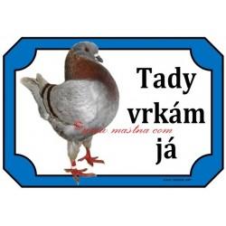 Tabulka holub king