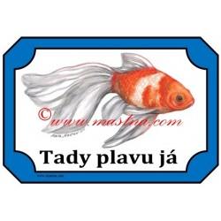 Tabulka závojnatka, ryba, akvaistika