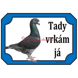 Tabulka holub německý výstavní