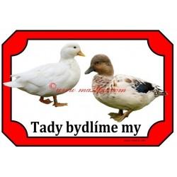 Tabulka kachna zakrslá