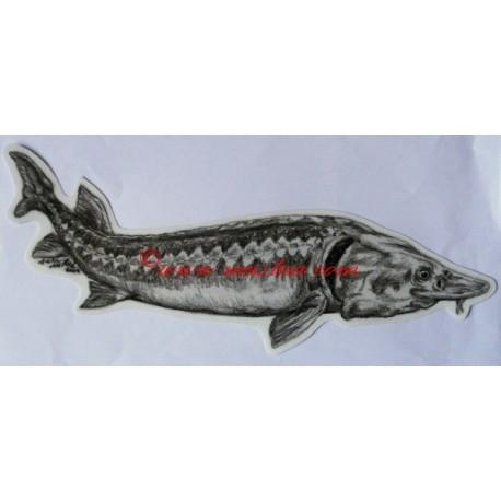 Samolepka jeseter, ryby
