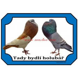 Tabulka holub český stavák