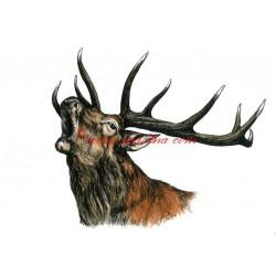 Obraz jelen, myslivost, kolorovaná perokresba - tisk