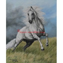 Obraz arabský kůň, akvarel