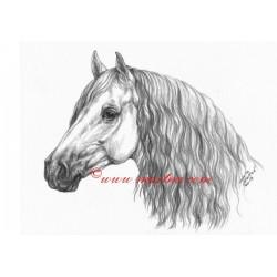 Obraz andaluzan, P.R.E., kůň, koně, tužka - tisk