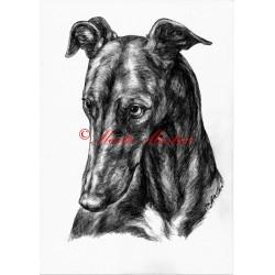 Obraz anglický chrt greyhound, tužka - tisk