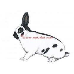 Obraz králík český strakáč, akvarel - tisk