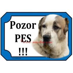 Tabulka středoasijský pastevecký pes, asiat