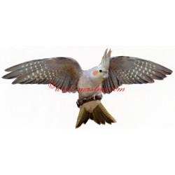 Samolepka papoušek korela
