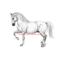 Obraz lipicán, kůň, koně, tužka - tisk