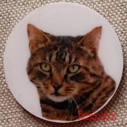 Kočka magnet nebo placka