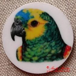 Papoušek amazoňan magnet nebo placka