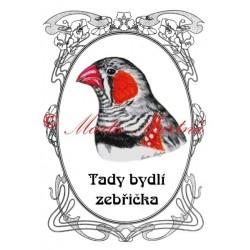 Tabulka zebřička, pták