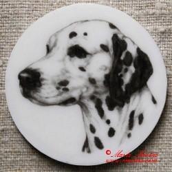 Dalmatin magnet nebo placka