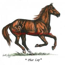 Obraz anglický plnokrevník Phar Lap, perokresba - tisk