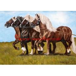 Obraz Mazur II., Almar, Arnold, Makron, českomoravský belgik, koně, olejomalba - tisk