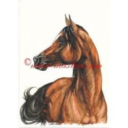 Obraz arabský kůň, koně, akvarel - tisk