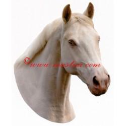 Samolepka teplokrevník, Kinský, albín, kůň , koně