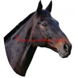 Samolepka anglický plnokrevník Irodrigo, kůň , koně